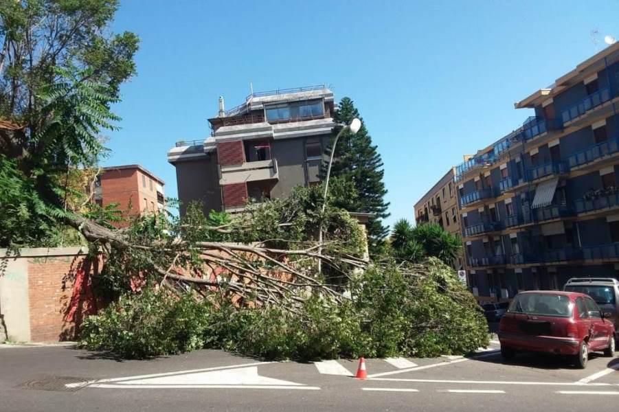 immagine albero caduto in strada a cagliari