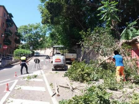 albero caduto nella strada