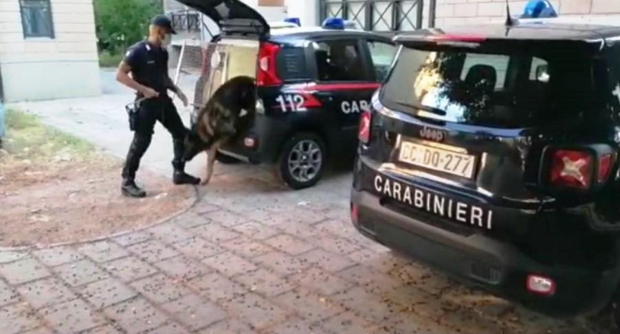 immagine cane dei carabinieri, arresto di un comemrciante di masainas
