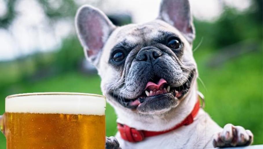 immagine birra per cani