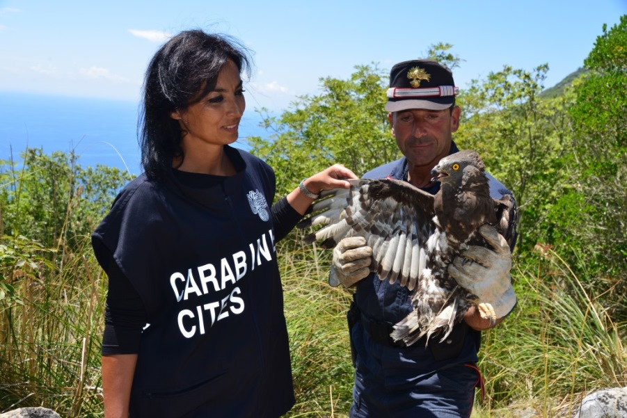 immagine operazione carabinieri forestali del cites