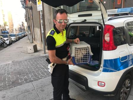 agente polizia municipale ritrova cagnetta scomparsa