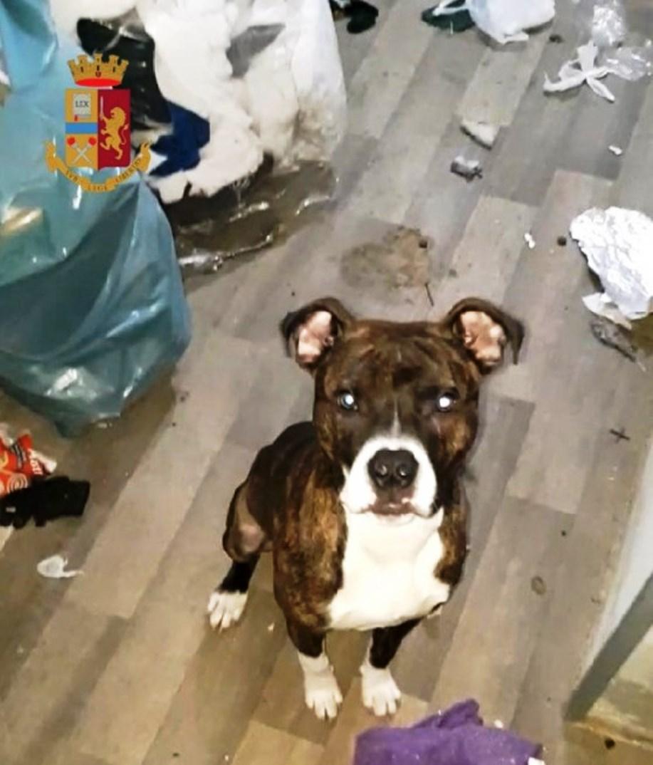 immagine cane salvato dalla polizia