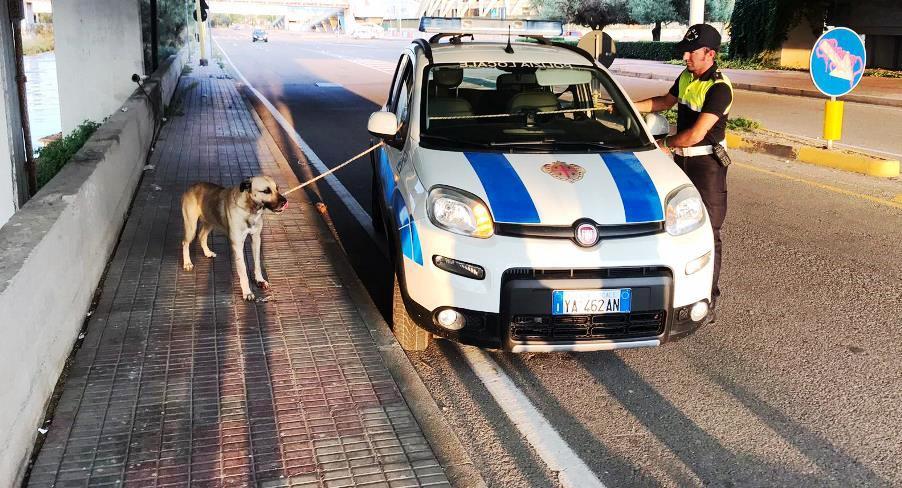 immagine cane salvato dalla polizia municipale di cagliari dopo essere stato investito