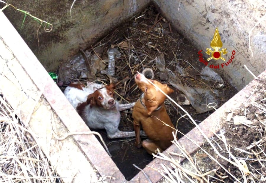 immagine cani caduti in un pozzo asciutto salvati dai vigili del fuoco