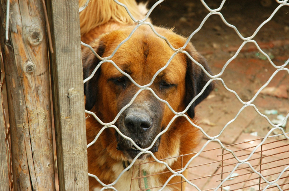 immagine cane , truffa del canile ai danni dei comuni