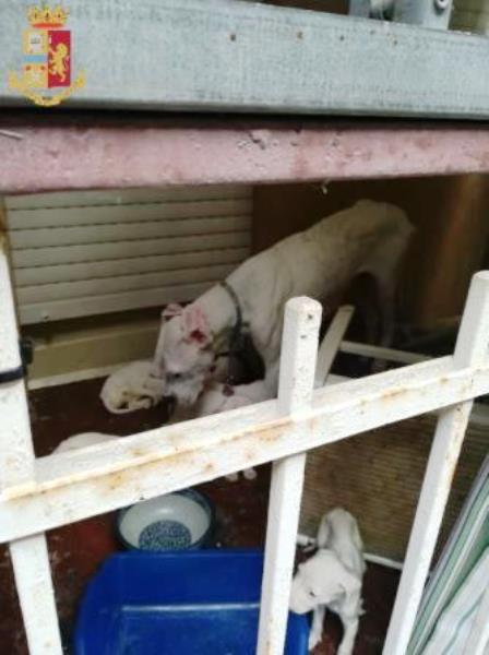 cani salvati dalla polizia a torino