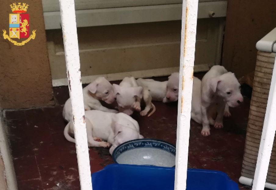 immagine cani rinchiusi in balcone