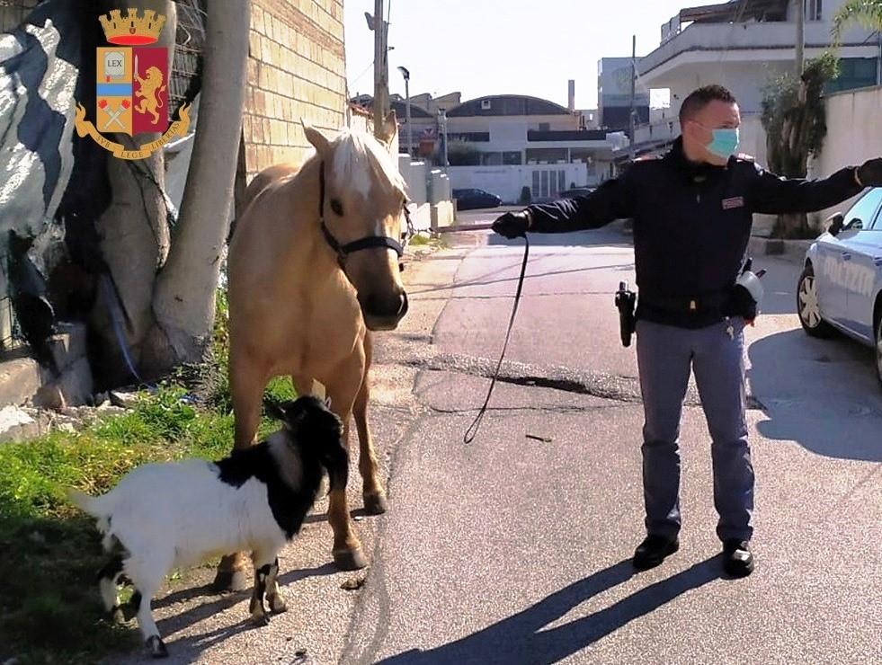 immagine cavallo e capretta a spasso per il paese
