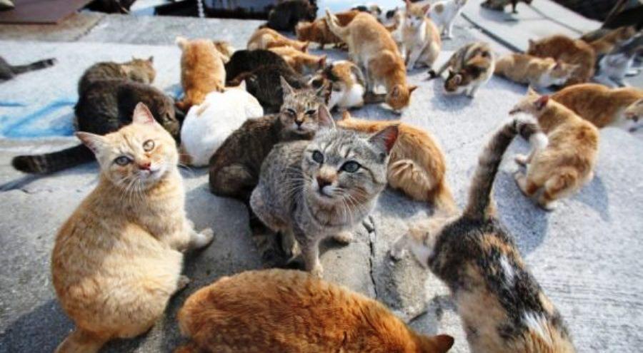 colonie feline