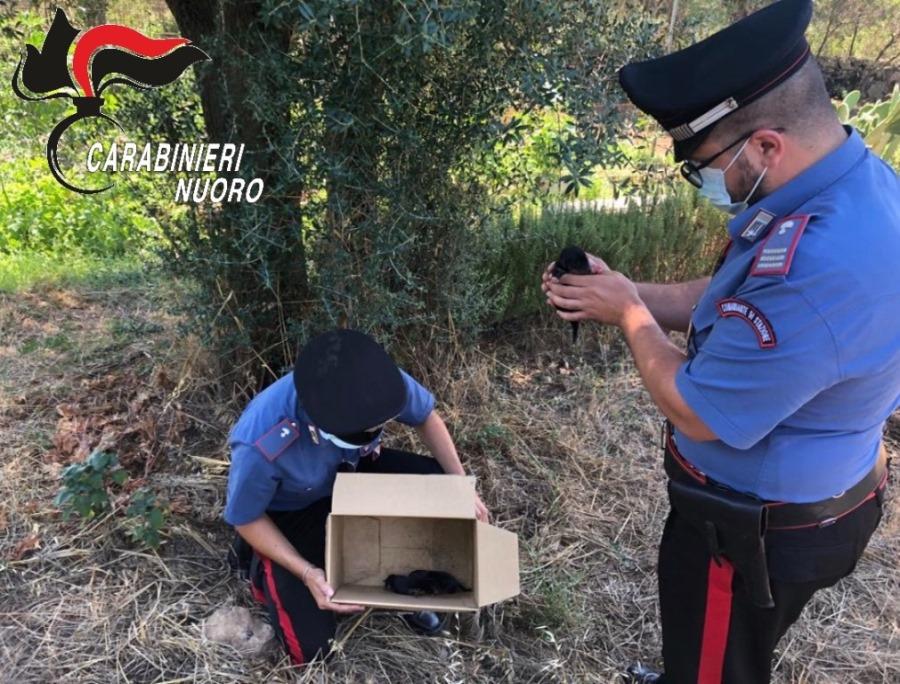 cuccioli di cane abbandonati salvati dai carabinieri