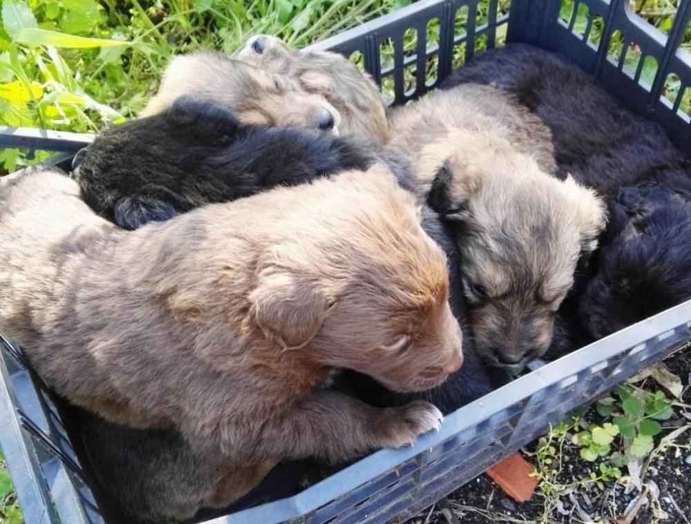 immagine cuccioli salvati a sassari