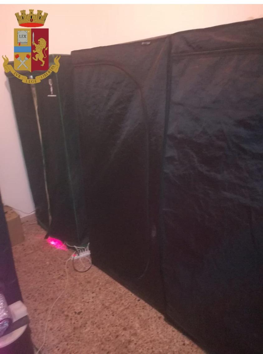 armadio contenenente piante di marijuana ad assemini, arrestato ragazzo di cagliari
