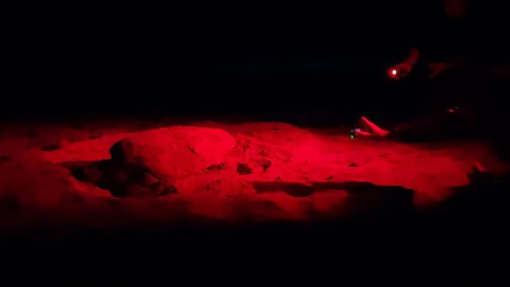 Arborea, tartaruga Caretta Caretta depone 98 uova nella costa oristanese