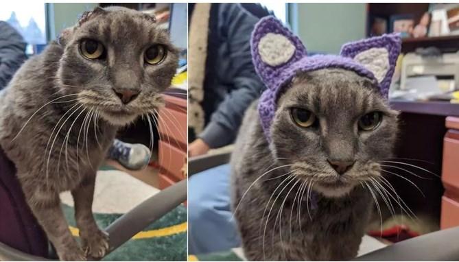 immagine gattina senza orecchie