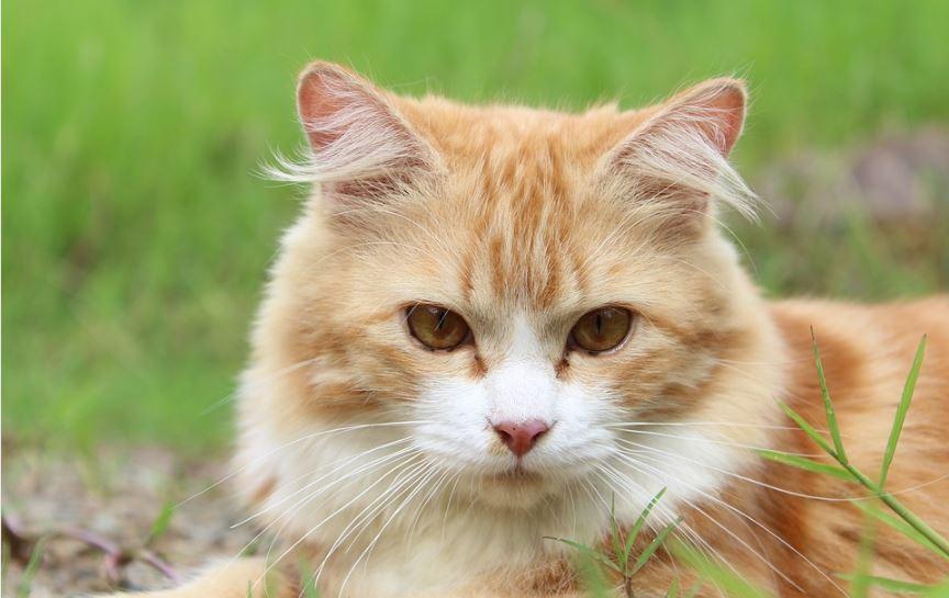 immagine strage di gatti a birori