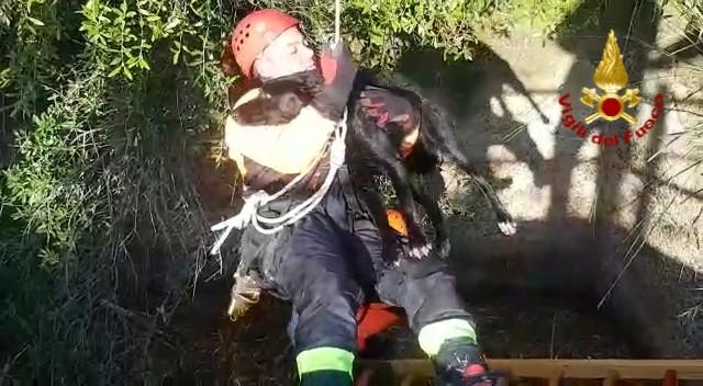 Cane salvato dal pozzo