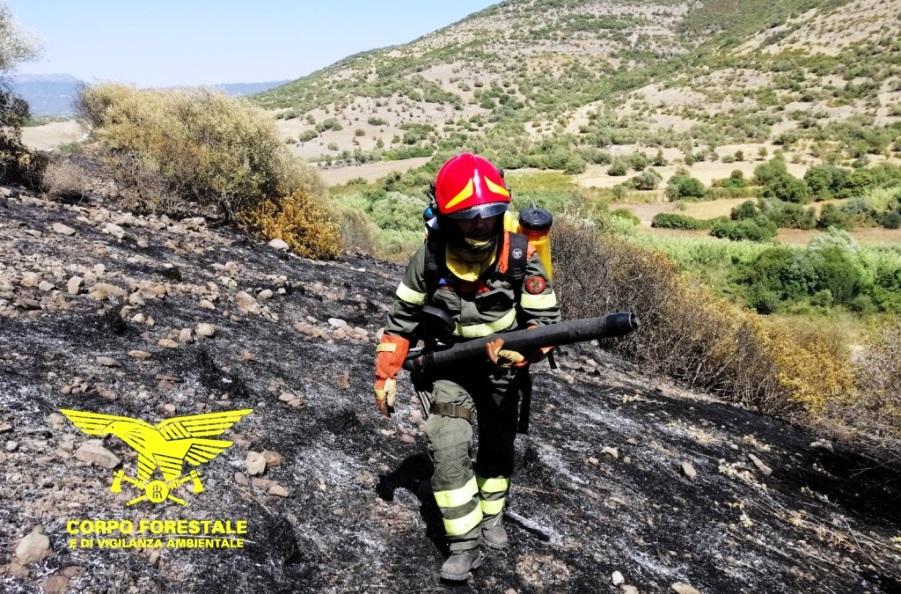 immagine forestale sardegna, incendio nelle campagne di macomer