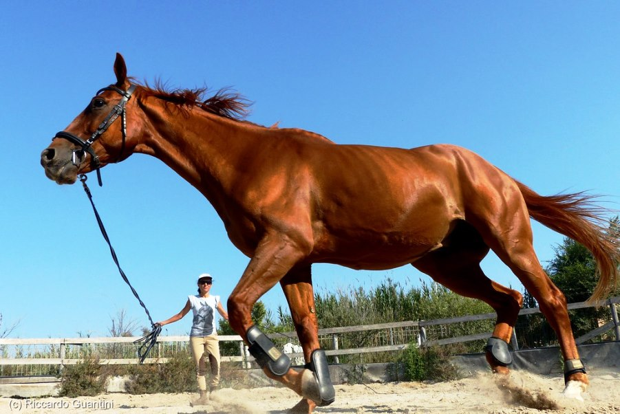 cavallo ippodromo cagliari