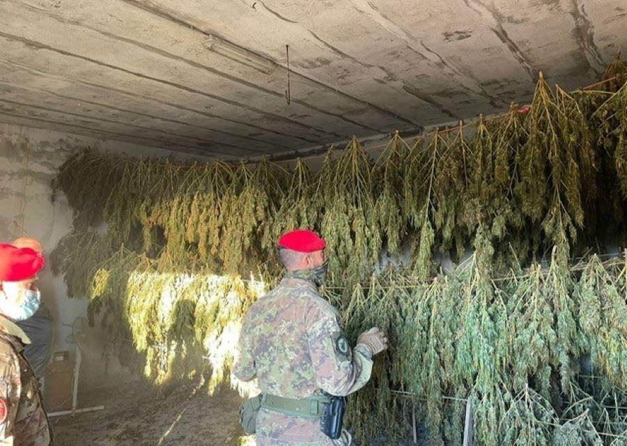 Jerzu ( NU ) Due arresti in flagranza di reato per coltivazione illegale di cannabis