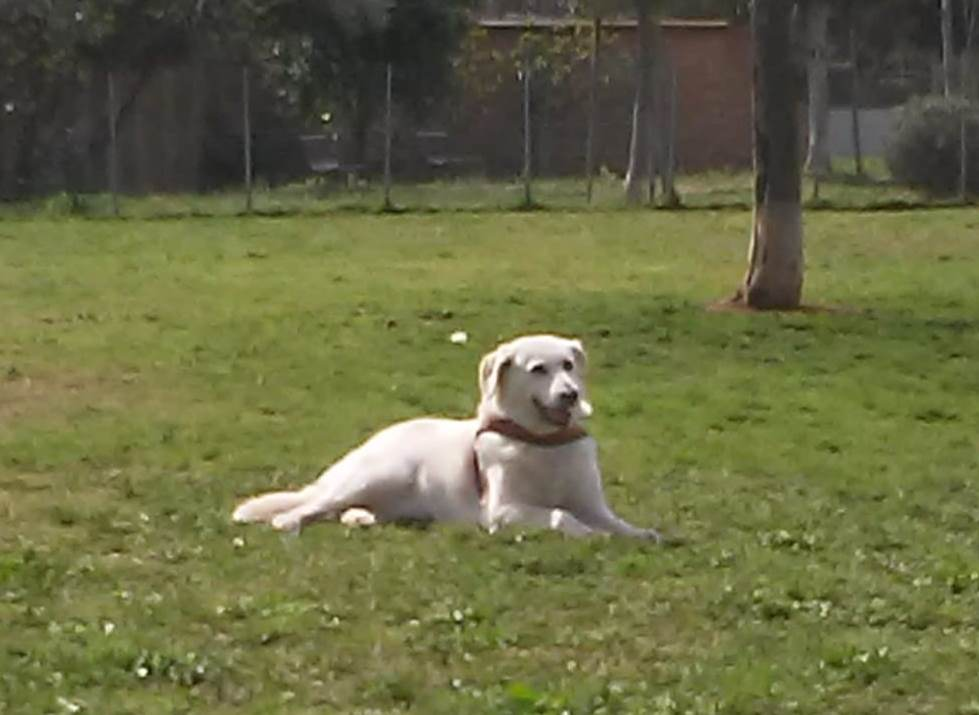 immagine cane al parco