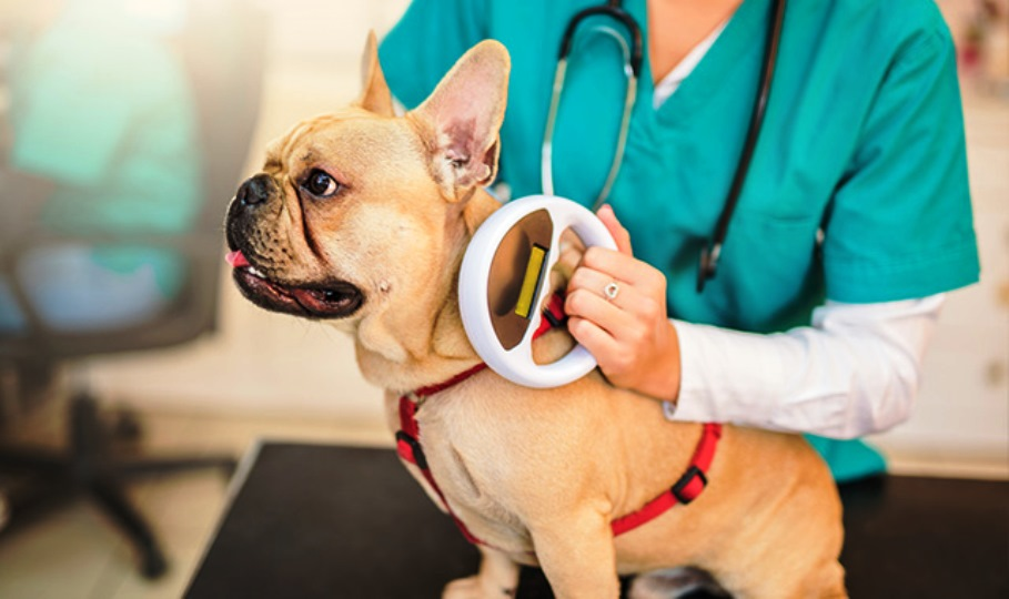 immagine microchip su cane