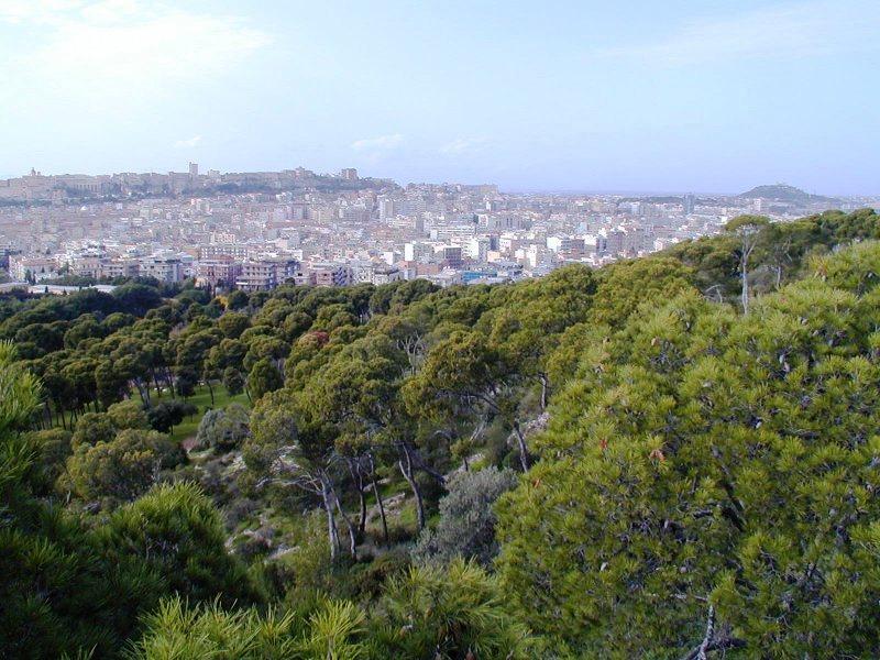 immagine monte urpinu cagliari, rinviata festa degli alberi