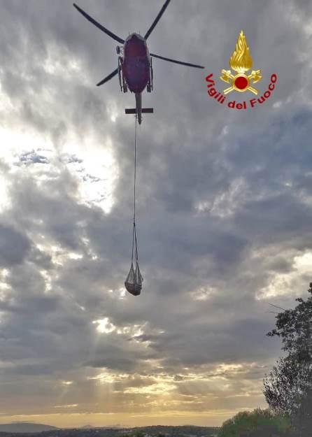 bovino salvato con elicottero dei vigili del fuoco
