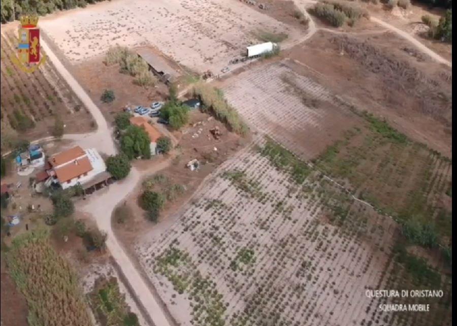 Santa Giusta (OR) Sequestrate 9000 piante di cannabis illegale e 350 Kg di cannabis essiccata. 5 arresti