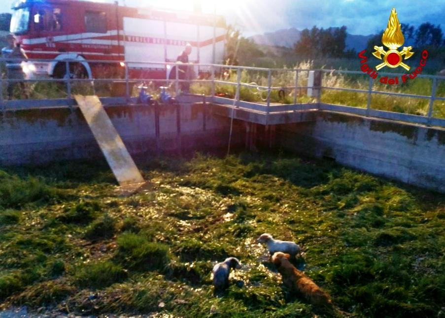 immagine salvataggio cani da parte dei vigili del fuoco di sassari