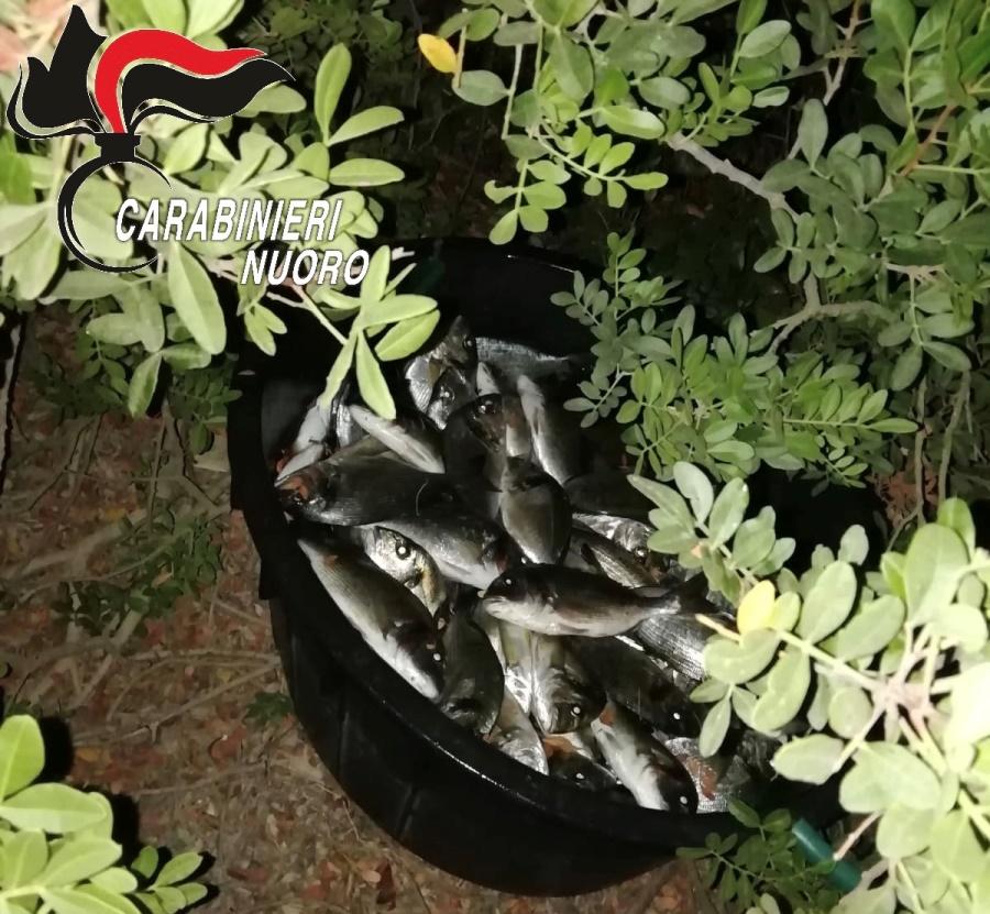immagine furto di pesce a san teodoro