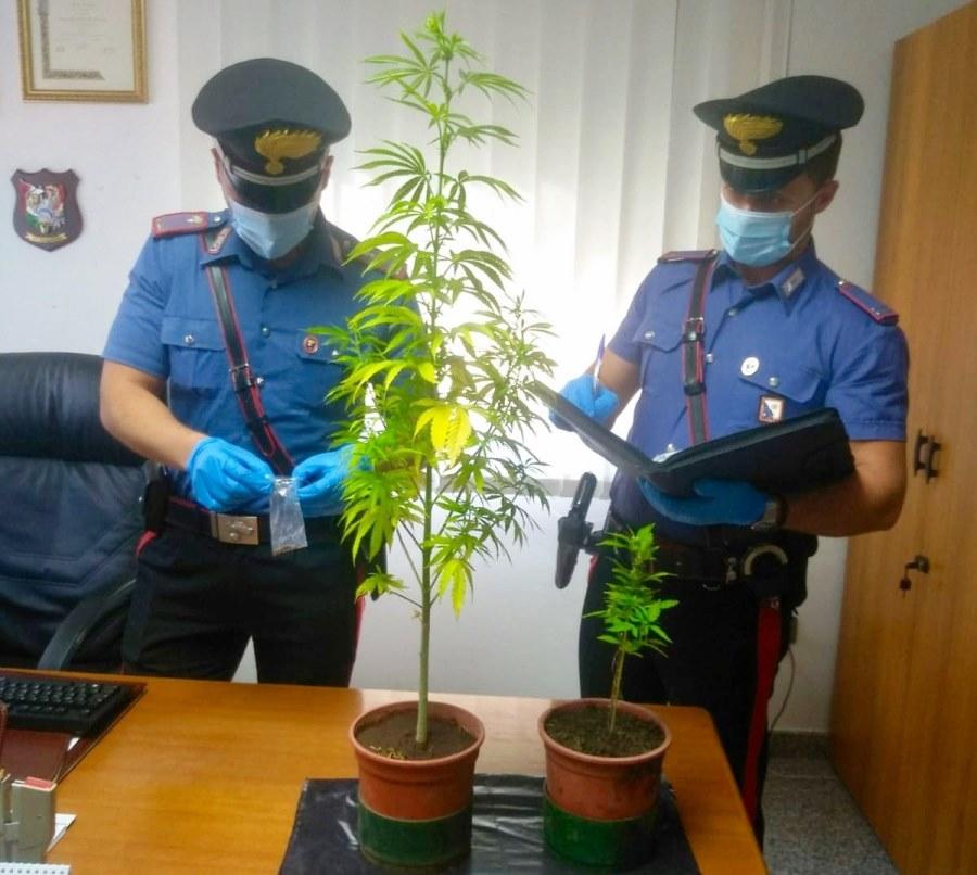 immagine carabinieri escalaplano cannabis