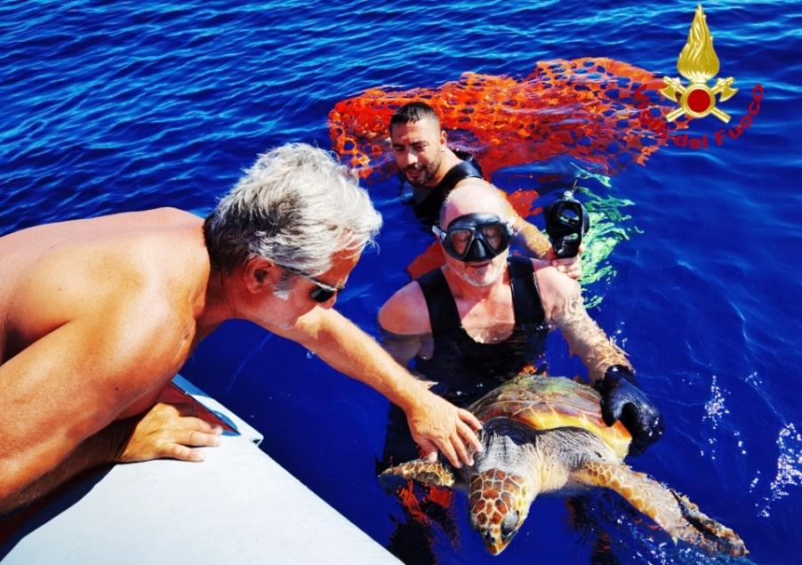 i sommozzatori salvano una tartaruga