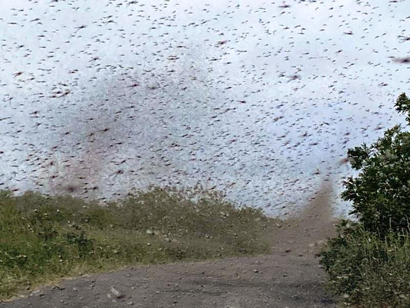 """""""Tornado di zanzare"""" osservato in Russia. L'impressionante video"""