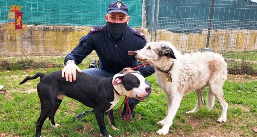 poliziotto con due cani salvati