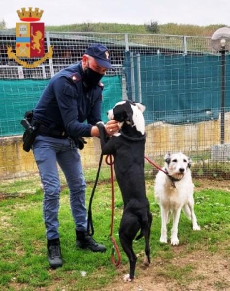 due cani salvati dalla polizia di stato a trastevere roma