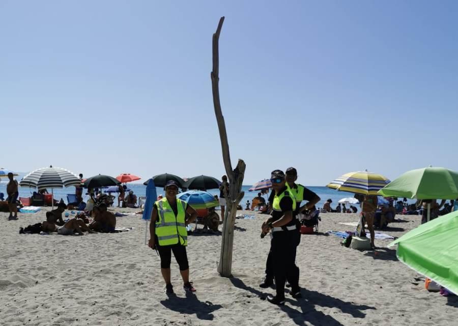 immagine tronco secco in spiaggia poetto.