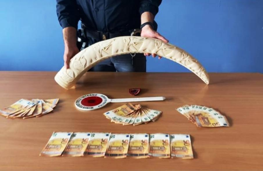 immagine denaro falso e zanna di elefante sequestrata a torino